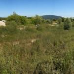 Avant les travaux. L'ancien étang est envahi de roseaux