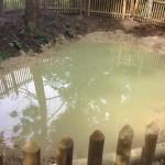 Les première notonectes ont colonisé le petit étang en 2014